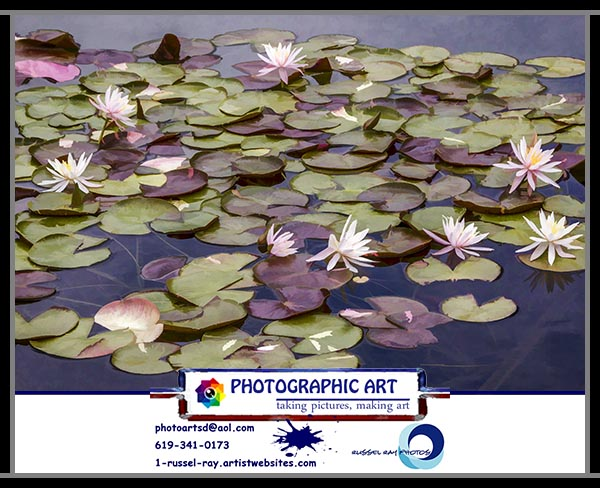 Water liles in the Lily Pond in San Diego's Balboa Park