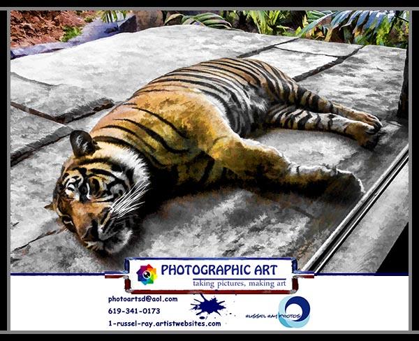 Sumatran tiger at Tiger Trail at the San Diego Zoo Safari Park