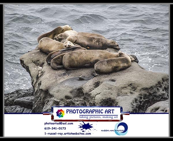Harbor seals and sea lions in La Jolla, California