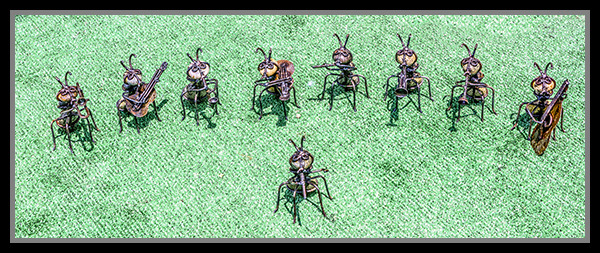 The Rock Ant Band