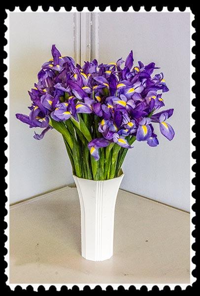 Irises from the 2014 San Diego County Fair