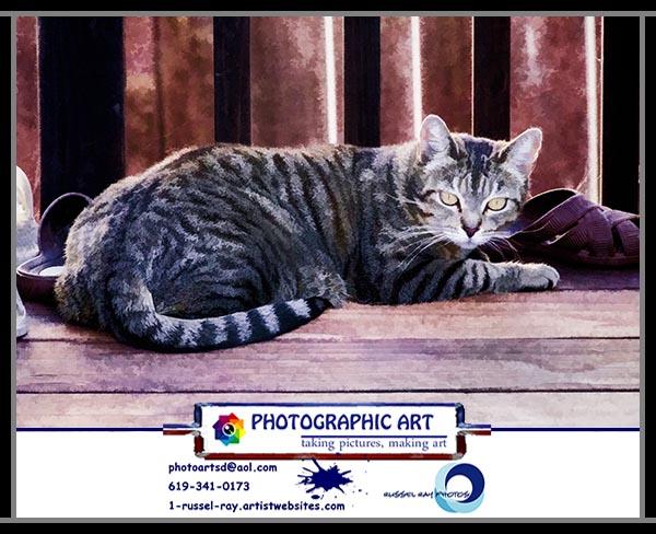 This is Julian's cat, Lola Mae