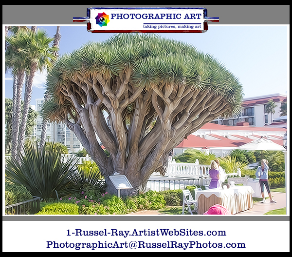 Yucca which appeared in the movie Some Like It Hot