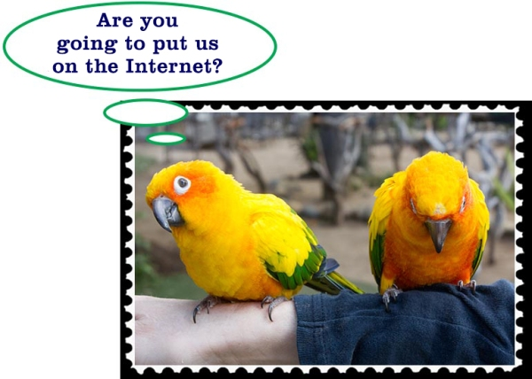 Are you going to put us on the Internet?