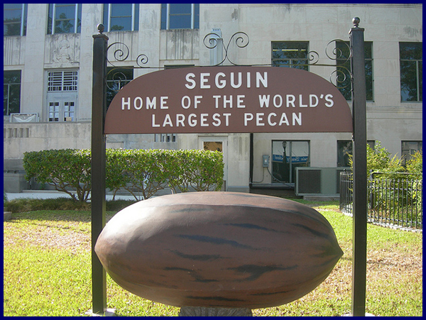 World's largest pecan