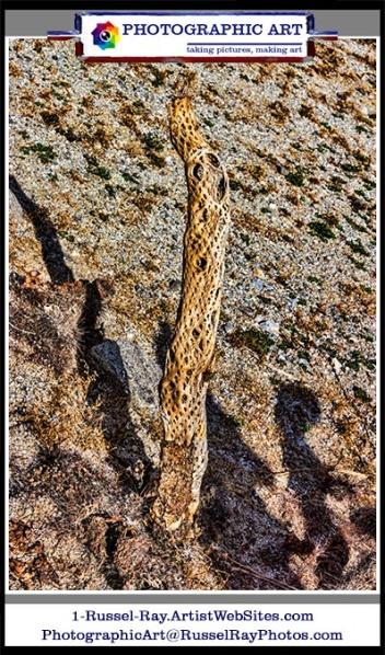 Desert Death I