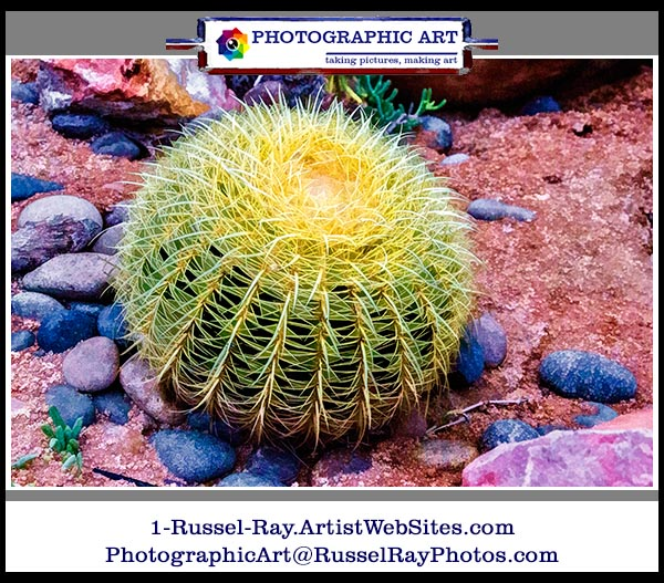 Cactus & succulents rule!