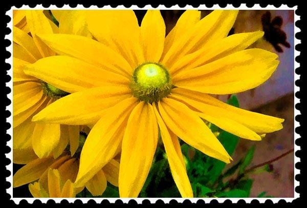 IMG_7373 faa stamp