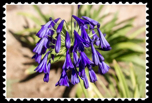 IMG_8347 faa stamp