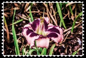 IMG_8360 faa stamp