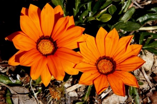 flower (301)