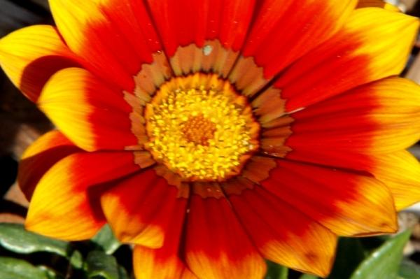 flower (302)
