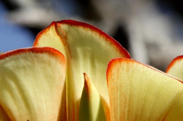 flower (312)