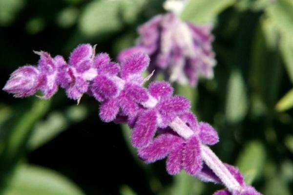 flower (342)