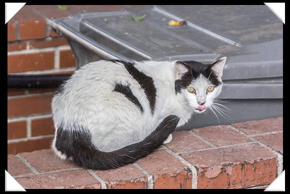 Feral Cat in downtown San Diego, 402 Island Avenue