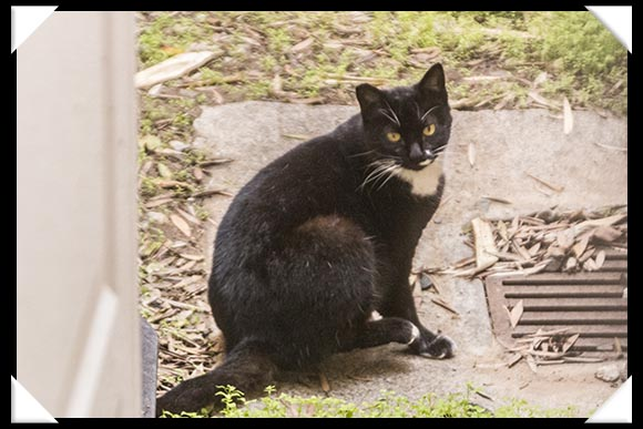 Feral Cat in downtown San Diego, 402 Island Avenue