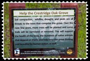 Crestridge Oak Grove