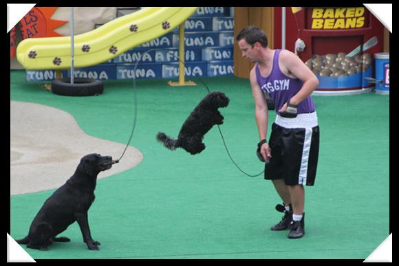 Pets rule at SeaWorld San Diego!