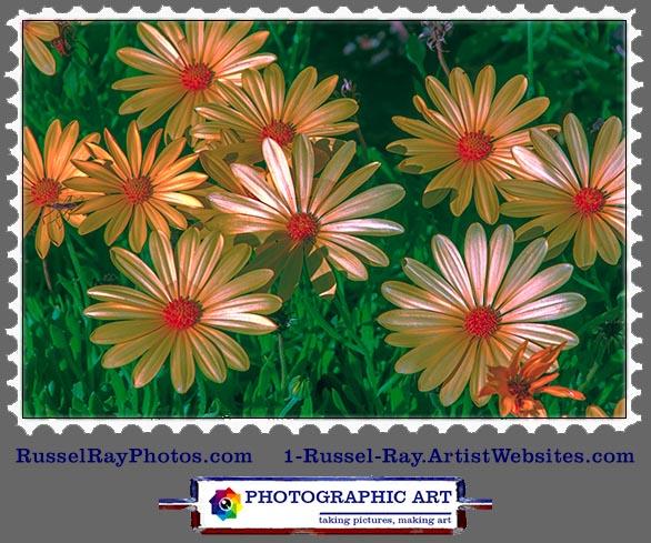 img_9164 daisy stamp