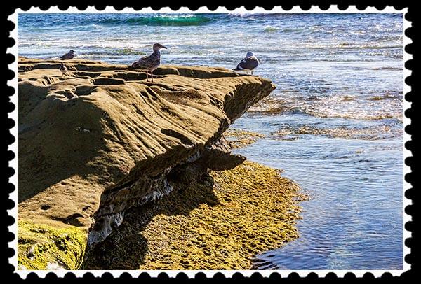 Seagulls at La Jolla Cove in La Jolla, California