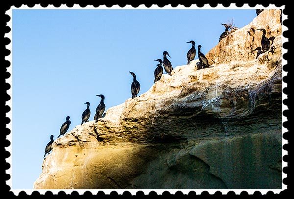 Cormorants at La Jolla Cove in La Jolla, California