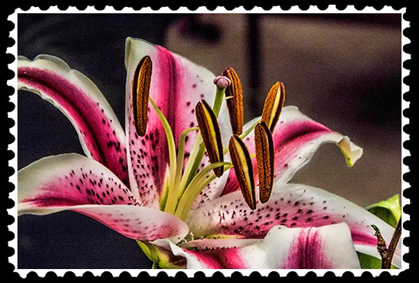 img_0221 day lily stamp