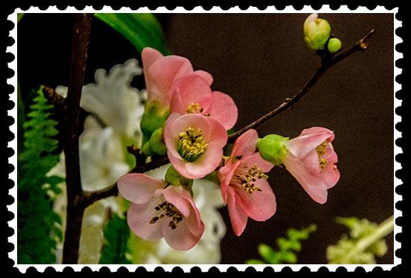 img_0222 flower stamp