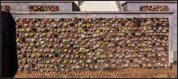 Succulent wall panorama la jolla