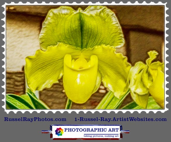 img_0408 yellow orchid stamp