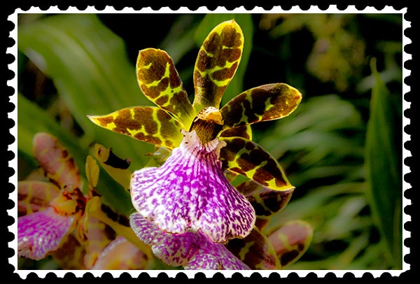 img_0410 orchid stamp