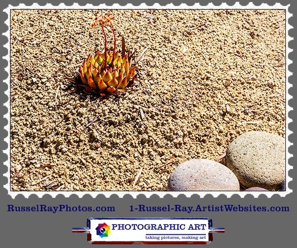 img_0538 succulent stamp