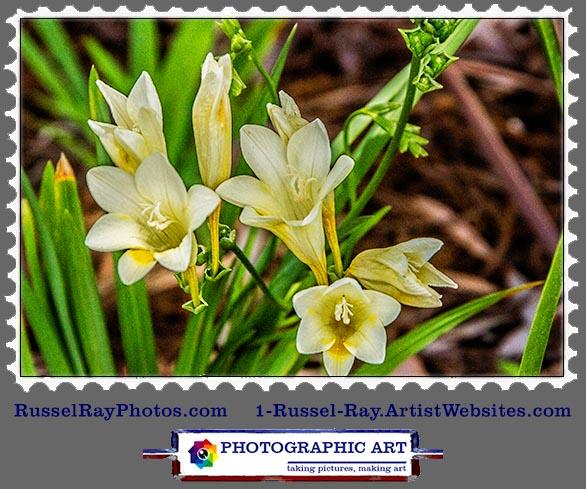 img_0544 flower stamp