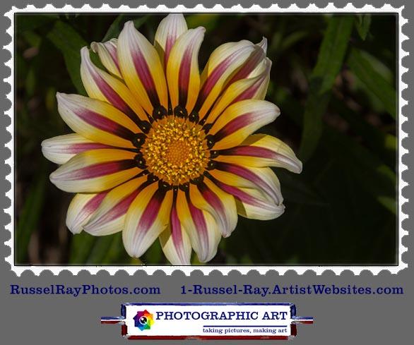 img_0545 flower stamp