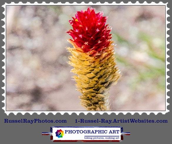 img_0551 flower stamp