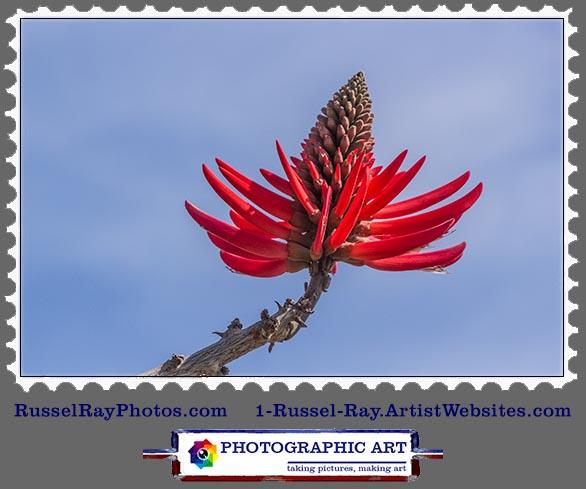 img_0558 coral tree flower stamp