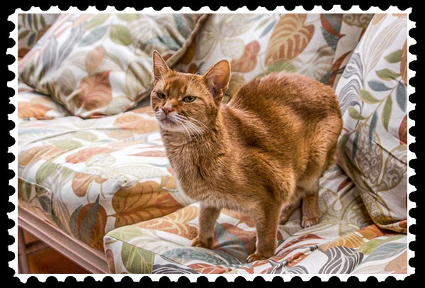 IMG_1753 abyssinian cat stamp