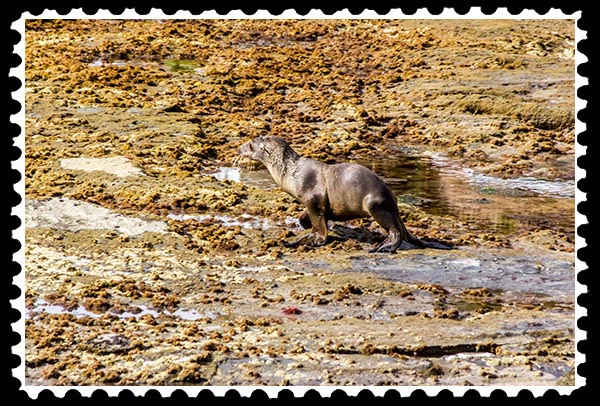 img_0233 sea lion baby la jolla stamp