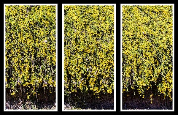 IMG_0828 triptych a