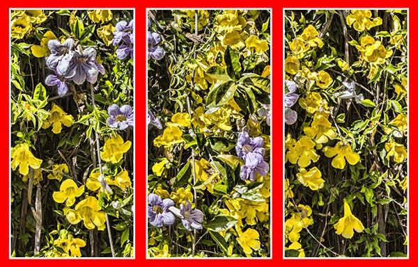 IMG_0830 triptych 1 a
