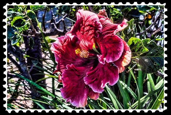 img_0884 hibiscus stamp