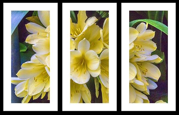 IMG_0888 triptych a