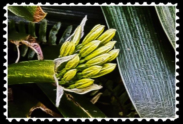 img_0889 stamp