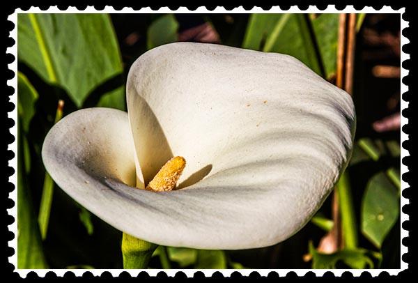 img_0989 stamp