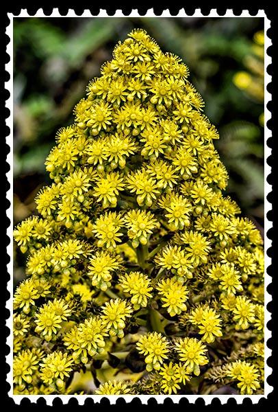 img_1336 stamp