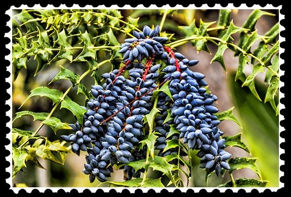 img_2536 stamp