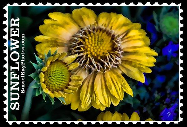 IMG_5179 sunflower faa stamp