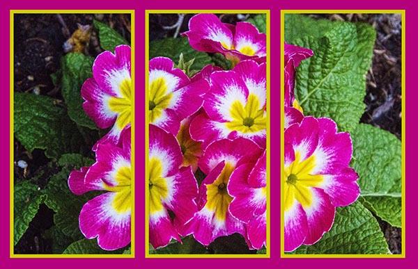 IMG_9415 triptych