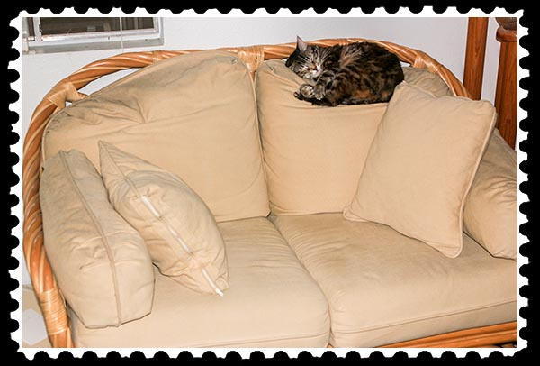 img_9700 zoey the cool cat love seat stamp