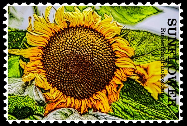 sunflower faa stamp