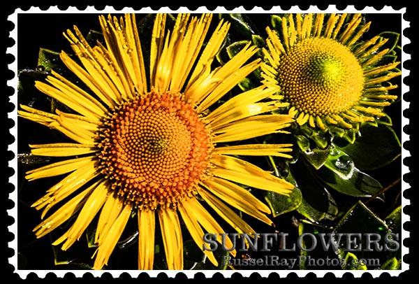 sunflowers faa stamp